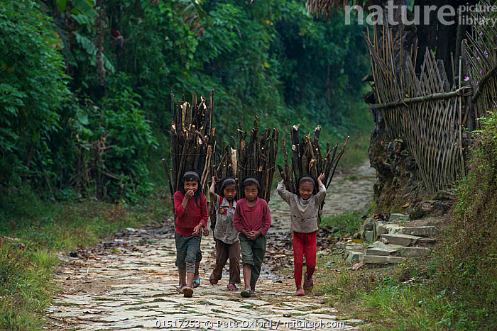 Nature Picture Library - Konyak Naga tribe people carrying