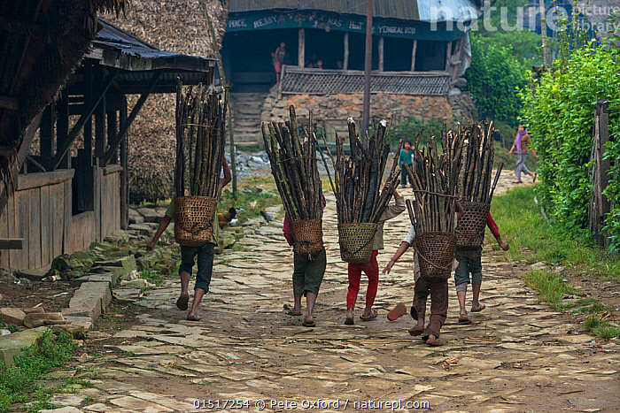 Nature Picture Library - Konyak Naga people carrying