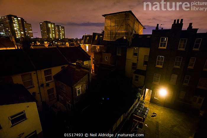 Urban Red fox (Vulpes vulpes)  searching for food near bins in a courtyard at night, West London, United Kingdom, May 2014. Finalist in the Urban category of the Wildlife Photographer of the Year Awards (WPOY) Competition 2015., high15,,Animal,Vertebrate,Mammal,Carnivore,Canid,True fox,Red fox,Animalia,Animal,Wildlife,Vertebrate,Mammalia,Mammal,Carnivora,Carnivore,Canidae,Canid,Vulpes,True fox,Vulpini,Caninae,Vulpes vulpes,Red fox,Foraging,Scale,Proportion,Nobody,Dark,Darkness,Europe,Western Europe,UK,Great Britain,England,London,Greater London,Courtyard,Courtyards,City,Building,Building Exterior,Residential Structure,Apartment,Apartments,Flats,House,Houses,Light,Lights,Outdoors,Open Air,Outside,Night,Scavenger,Scavengers,Nature,Natural,Natural World,Wild,Competition winner,Insignificant,Lit Light,Photography award,,,urban,, Neil Aldridge