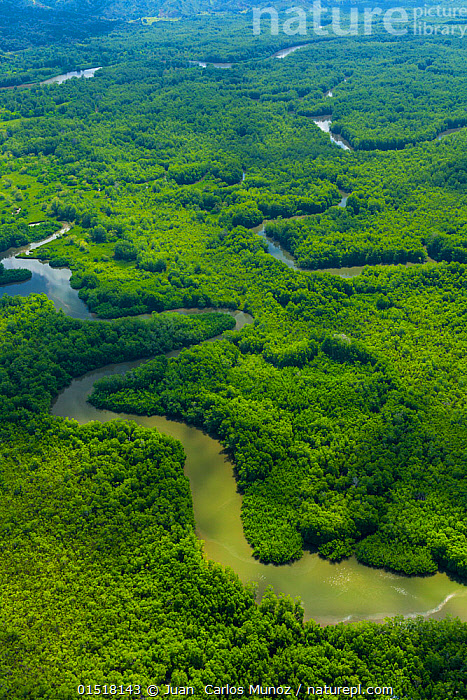 Aerial view of Delta Sierpe River Terraba, Corcovado National Park, Osa Peninsula, Puntarenas Province, Costa Rica. December 2014.  ,  high15,,,Lush,Colour,Green,Nobody,Vibrant Colour,Curve,Latin America,Central America,Costa Rica,Aerial View,High Angle View,Light,Lights,Shadow,Sunlight,Flowing Water,River,Landscape,Landscapes,Outdoors,Open Air,Outside,Day,Coast,Rainforest,Mangrove,Tropical rainforest,Freshwater,Coastal Wetland,Coastal,Water,Reserve,Abstract,Abstracts,Forest,Biodiversity hotspot,Protected area,National Park,Elevated view,Delta,Deltas,Green colour,Winding,Divine  ,  Juan  Carlos Munoz