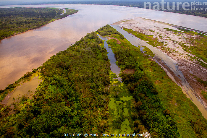 Aerial view of Amazon River, with settlements and secondary rainforest, near Iquitos, Peru. July 2015., high15,,,Connection,Convergence,Convergance,Converge,Converging,Nobody,Latin America,South America,Peru,Diminishing Perspective,Aerial View,High Angle View,Plant,Treetop,Treetops,Flowing Water,River,Landscape,Landscapes,Outdoors,Open Air,Outside,Day,Rainforest,Freshwater,Water,Habitat,Forest,Regenerating,Regrowth,Elevated view,Expansive,Amazon,Iquitos,Loreto,Secondary Forest (Forest),, Mark  Bowler