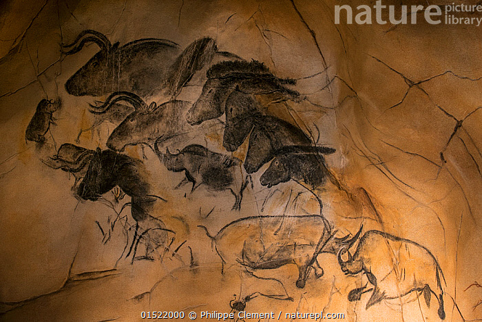Nature Picture Library Replica Of Prehistoric Rock Paintings Of The Chauvet Cave Replica In Nationalparkzentrum Falkenstein Bavarian Forest Np Showing Extinct Animals Woolly Rhinoceros Coelodonta Antiquitatis Wild Horses And Aurochs Bulls Bos