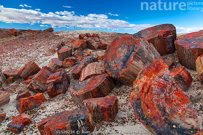 Pieces of petrified trees / wood, Petrified Forest National Park, Arizona, USA, February 2015.  ,  American,Colour,Colourful,Colorful,North America,USA,Western USA,Southwest US,Arizona,Wood,Wooden,Desert,Deserts,Badlands,Fossil,Fossils,Remains,Rock,Landscape,Landscapes,Reserve,Geology,Protected area,National Park,Petrified Forest National Park,Petrified,Paleontology,American,  ,  Juan  Carlos Munoz