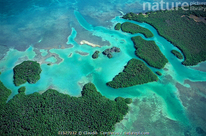 Aerial view of Red mangrove (Rhizophora mangle) coastal lagoon, Sian Ka'an Biosphere Reserve, Caribbean Sea, Mexico, January  ,  catalogue8,,Plant,Vascular plant,Flowering plant,Rosid,Mangrove,True mangroves,Red mangrove,Plantae,Plant,Tracheophyta,Vascular plant,Magnoliopsida,Flowering plant,Angiosperm,Seed plant,Spermatophyte,Spermatophytina,Angiospermae,Malpighiales,Rosid,Dicot,Dicotyledon,Rosanae,Rhizophoraceae,Mangrove,Rhizophora,True mangroves,True mangrove trees,Rhizophora mangle,Red mangrove,American mangrove,Bruguiera decangulata,Rhizophora americana,Rhizophora samoensis,Colour,Blue,Turquoise,Aqua,Aqua Blue,Nobody,Pattern,Patterned,Patterns,Natural Pattern,Latin America,Central America,Mexico,Aerial View,High Angle View,Tropical,Island,Islands,Reef,Reefs,Coral Reef,Coral Reefs,Ocean,Caribbean Sea,Outdoors,Open Air,Outside,Day,Nature,Natural,Natural World,Beauty In Nature,Topography,Biosphere,Coast,Woodland,Marine,Coastal,Water,Reserve,Forest,Saltwater,Tropics,Protected area,Elevated view,Blue Colour,Biosphere Reserve,  ,  Claudio  Contreras