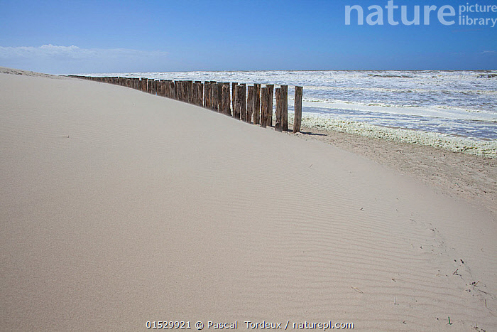 Stormy waves on the shore, with groynes, Berck, Pas De Calais, France, May 2015.  ,  catalogue8,,,Nobody,Europe,Western Europe,France,Nord-Pas-de-Calais,Copy Space,Groyne,Coastal Groin,Coastal Groins,Groin,Groins,Waterbreak,Waterbreaks,Horizon,Horizon Over Water,Beach,Sky,Sands,Tide,Tides,Weather,Storm,Outdoors,Open Air,Outside,Day,Coast,Coastal,Bad Weather,Sea defences,Sea defence,Severe weather,View to sea,Negative space,Blue sky,Pas de Calais,France,Berck,  ,  Pascal  Tordeux