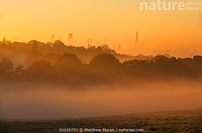 Landscape of London at dawn with fog from Hampstead Heath, London, England, UK. November 2014.  ,  Mood,Calm,Europe,Western Europe,UK,Great Britain,England,London,Greater London,Back Lit,City,Mist,Landscape,Autumn,Nature,Beauty In Nature,Silhouette,Dawn,Moods,Landscapes,Silhouettes,high16  ,  Matthew Maran