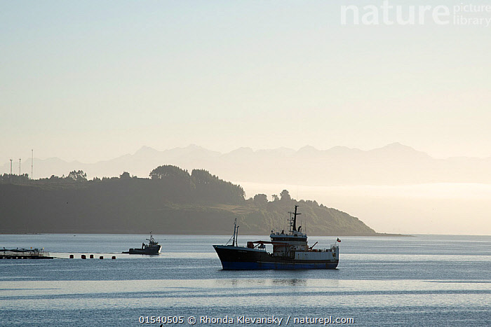 Cargo boat in the Pacific Ocean, Chiloe, Chile, South America. January 2016.  ,  Latin America,South America,Chile,Copy Space,Boat,Boats,Industrial Ship,Cargo Ship,Cargo Boats,Cargo Ships,Peninsula,Promontory,Ocean,Pacific Ocean,Coast,Marine,Coastal,Water,Working-boats,Cargo boat,Saltwater,Sea,Negative space,  ,  Rhonda Klevansky