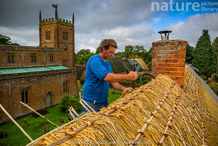 Dan Quatermain, master thatcher, working on a thatched roof in Wroxton village, Oxfordshire, UK. September 2015., Standing,People,Man,Craftsperson,Craftsmanship,Craft Occupation,Craft Occupations,Craftsman,Craftsmen,Craftspeople,Craftswoman,Craftswomen,Tradesman,Tradesmen,Tradespeople,Tradesperson,Skill,Traditional,1 Person,Europe,Western Europe,UK,Great Britain,England,Cotswolds,Oxfordshire,Equipment,Work Tool,Tool,Tools,Work Tools,Settlement,Village,Building,Roof,Roofs,Rooftop,Rooftops,Thatched Roof,Thatch,Thatched,Thatched Roofs,Thatches,Church,Churches,Culture,European Culture,European Cultures,British Culture,British,Cotswolds AONB,Men,Traditions,Villages,Buildings,Cultures,World Cultures,high16, Nick Turner