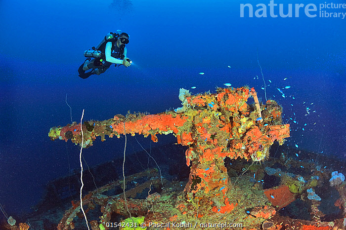 A diver above the cannon gun at the bow of the the wreck of the San Francisco Maru, a passenger cargo used as a auxiliary transport vessel, Chuuk or Truk Lagoon, Carolines Islands, Pacific Ocean  ,  Diving,Underwater Diving,Scuba Diving,Wreck,Shipwreck,Horizontal,Equipment,Weaponry,Weapon,Weapons,Firearm,Firearms,Artillery,Artilleries,Cannon,Cannons,Canon,Canons,Boat,Boats,Tropical,Island,Islands,Ocean,Pacific Ocean,Exploration,Marine,Underwater,Water,Saltwater,Tropics,  ,  Pascal Kobeh