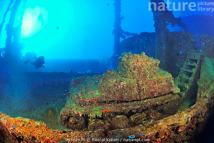 A diver above a tank laying on the deck of the wreck of the Nippo Maru, a cargo ship used as a naval auxiliary, Chuuk or Truk Lagoon, Carolines Islands, Pacific Ocean  ,  Diving,Underwater Diving,Scuba Diving,Wreck,Horizontal,Land Vehicle,Motor Vehicle,Military Vehicle,Military Vehicles,Tank,Tanks,Boat,Boats,Tropical,Island,Islands,Ocean,Pacific Ocean,Exploration,Marine,Underwater,Water,Saltwater,Tropics,  ,  Pascal Kobeh