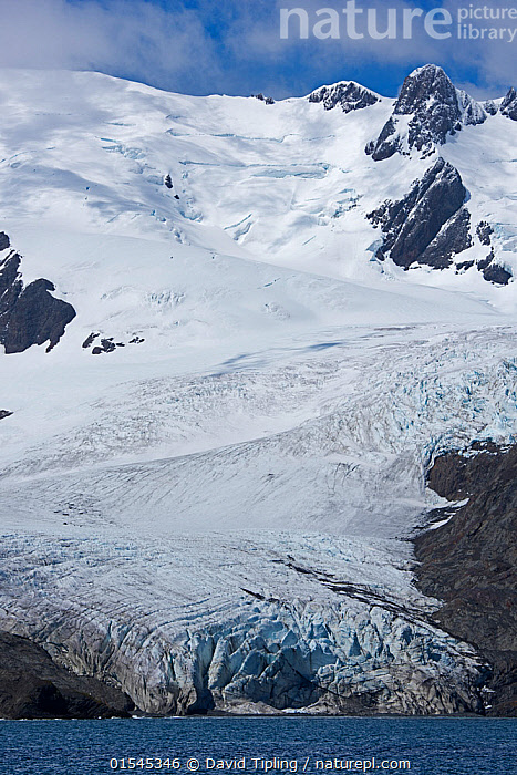 RF - Schrader Glacier in Wilson Harbour, South Georgia. January 2015. (This image may be licensed either as rights managed or royalty free.)  ,  Nobody,Steep,Temperature,Cold,Ice,Glacier,Glacial,Glaciers,Snow,Landscape,Day,Nature,Wildlife,Wild,Coast,Marine,Coastal,Water,Saltwater,Sea,Subantarctic islands,South Georgia Island,View to land,Impenetrable,RF,Royalty free,RFCAT1,Wilson Harbour,Schrader Glacier,RF16Q4,  ,  David Tipling