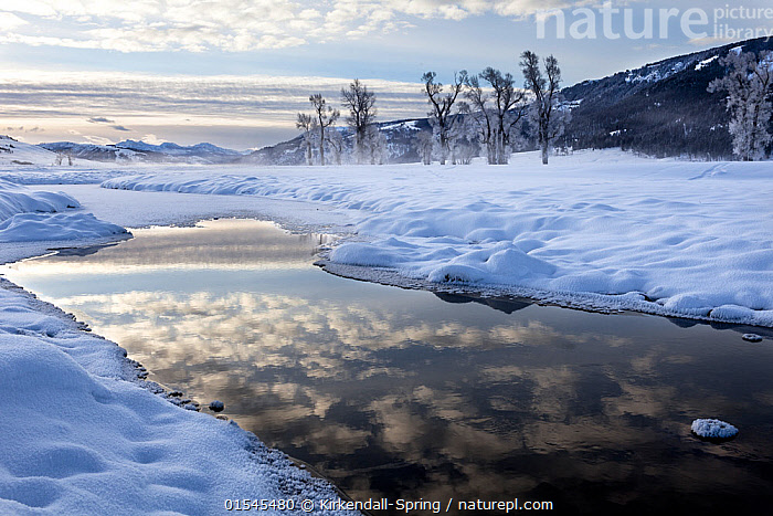 Winter sunrise with reflection on Lamar River, Lamar Valley, Yellowstone National Park, Wyoming, USA. February 2016., American,Mood,Calm,North America,USA,Western USA,Wyoming,Reflection,Sky,Cloud,Flowing Water,River,Snow,Sunrise,Landscape,Winter,Freshwater,Water,Reserve,Protected area,National Park,Dawn,Yellowstone National Park,American,United States of America,, Kirkendall-Spring
