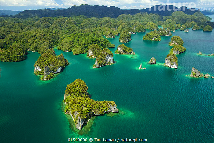 Limestone Islands in the Northern part of Kabui Bay.  Waigeo Island at the top, Raja Ampat Islands, West Papua, Indonesia., Oceania,Melanesia,New Guinea,Aerial View,High Angle View,Tropical,Island,Islands,Ocean,Pacific Ocean,Landscape,Coast,Rainforest,Tropical rainforest,Marine,Coastal,Water,Forest,Saltwater,Indonesia,Elevated view,, Tim  Laman