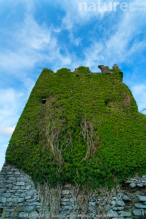 Ballycarbery Castle, Caherciveen, Ring of Kerry, County Kerry, Ireland, Europe. September 2015., Overgrown,16th Century,Europe,Western Europe,Republic Of Ireland,Building,Historic Building,Historic Buildings,Historical Building,Historical Buildings,Castle,Castles,History,Abstract,Abstracts,County Kerry,The Past,, Juan  Carlos Munoz