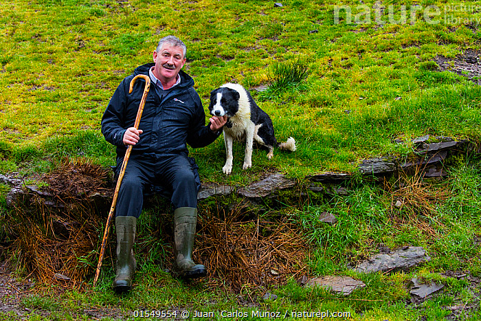 Farmer at sheepdog trial in Caitins, Kells Area, Ring of Kerry, Iveragh Peninsula, County Kerry, Ireland, Europe. September 2015.  ,  Canis familiaris,Sitting,Working,People,Man,Agricultural Occupation,Farmer,1 Person,Europe,Western Europe,Republic Of Ireland,Portrait,Animal,Cane,Canes,Staff,Walking Stick,Walking Sticks,Clothing,Footwear,Boot,Boots,Rubber Boot,Gum Boot,Gum Boots,Rubber Boots,Wellies,Wellington Boot,Wellington Boots,Wellingtons,Welly,Countryside,Domestic animal,Pet,Domestic Dog,Pastoral Dog,Medium dog,Border Collie,Collie,Domesticated,Canis familiaris,Dog,County Kerry,Mammal,  ,  Juan  Carlos Munoz