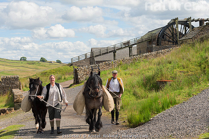 Two lead miners leading two Dales ponies, in front of the waterwheel, at Killhope Museum, near Cowshill, Upper Weardale, County Durham, North Pennines, England, UK, August 2016.  Critically Endangered breed.  ,  Working,People,Man,Manual Worker,Miner,Miners,Traditional,Europe,Western Europe,UK,Great Britain,England,County Durham,Durham,Building,Museum,Museums,History,The Past,  ,  Kristel  Richard