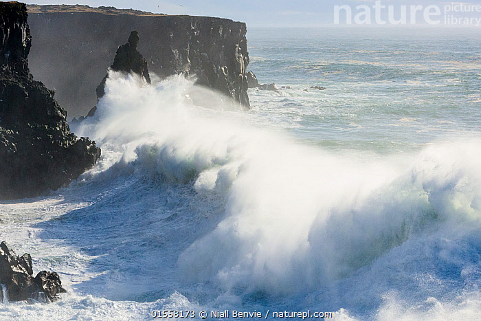 RF- Storm waves breaking against cliffs at Svortuloft, Iceland. (This image may be licensed either as rights managed or royalty free.)  ,  Energetic,Nobody,Europe,Northern Europe,North Europe,Nordic Countries,Scandinavia,Iceland,High Angle View,Cliff,Wave,Weather,Storm,Outdoors,Day,Nature,Wildlife,Wild,Coast,Marine,Coastal,Water,Bad Weather,Saltwater,Sea,Severe weather,Elevated view,Dramatic,RF,Royalty free,RFCAT1,RF17Q1,Svortuloft,  ,  Niall Benvie