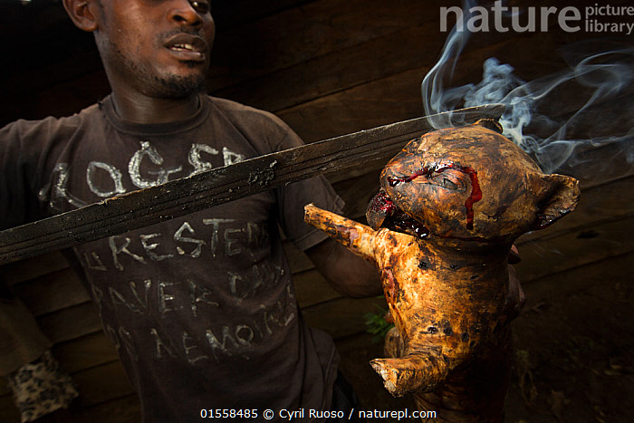 Man smoking a  small wild cat, caught for bush meat, Cameroon, February 2015., Animal,Vertebrate,Mammal,Carnivore,Cat,Animalia,Animal,Wildlife,Vertebrate,Mammalia,Mammal,Carnivora,Carnivore,Felidae,Cat,People,Man,Africa,West Africa,Cameroon,Bushmeat,Conservation issues,West African,, Cyril Ruoso