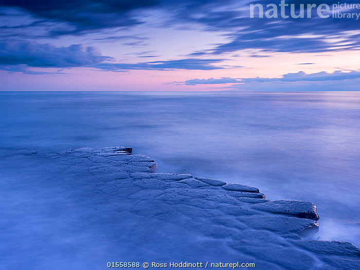 RF - Kimmeridge Bay, ledges at twilight, The Purbecks, Dorset, UK. April. (This image may be licensed either as rights managed or royalty free.)  ,  Nobody,Pastel,Europe,Western Europe,UK,Great Britain,England,Dorset,Ledge,Horizon,Horizon Over Water,Sky,Cloud,Bay,Mist,Outdoors,Twilight,Coast,Marine,Coastal,Water,Saltwater,Sea,View to sea,Isle of Purbeck,RF,Royalty free,RFCAT1,Kimmeridge Bay,RF17Q1,,,Dorset and East Devon Coast, UNESCO World Heritage Site,  ,  Ross Hoddinott