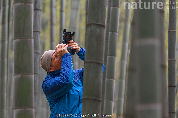 Wildlife Photographer Ingo Arndt working on location, Shunan Bamboo Sea, Shunan Zhuhai National Park, Sichuan, China April., Plant,Vascular plant,Flowering plant,Monocot,Grass,Plantae,Plant,Tracheophyta,Vascular plant,Magnoliopsida,Flowering plant,Angiosperm,Seed plant,Spermatophyte,Spermatophytina,Angiospermae,Poales,Monocot,Monocotyledon,Lilianae,Poaceae,Grass,True grass,Gramineae,Capturing An Image,Photographing,People,Man,Photographer,Photographers,Asia,East Asia,China,Photography,Bamboo,Bamboos,Environment,Sichuan Province,Sichuan,, Ingo Arndt