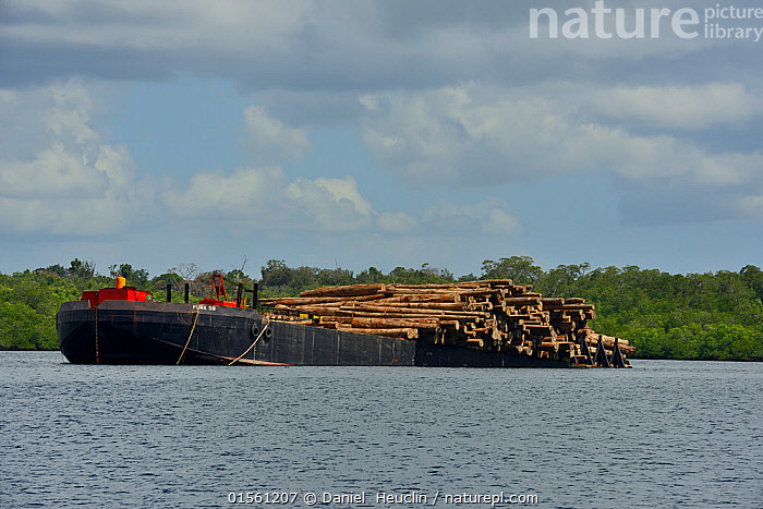 Boat loaded with timber from local forests, Siberut, Sumatra, July, Asia,South East Asia,Indonesia,Boat,Environment,Environmental Issues,Environmental Damage,Deforestation,Natural Resources,Biodiversity hotspot,Sumatra,, Daniel  Heuclin