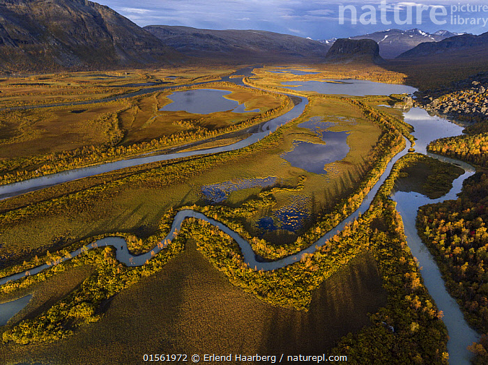Autumn in the Rapa delta. Laponia World Heritage Site, Lapland, Sweden September  ,  Europe,Northern Europe,North Europe,Nordic Countries,Scandinavia,Sweden,Horizontal,Square Image,Flowing Water,River,Landscape,Autumn,Autumnal,Fall,Freshwater,Water,Reserve,Protected area,National Park,Delta,Deltas,Laponia,  ,  Erlend Haarberg