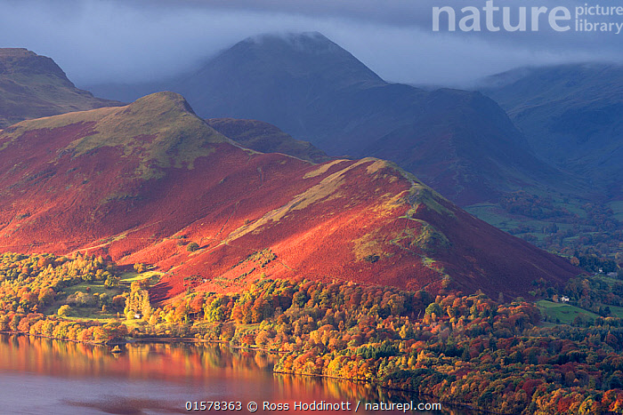 Catbells and the edge of Derwentwater bathed in early morning light and autumnal colours, Latrigg, Keswick, The Lake District, Cumbria, UK. November 2016., catalogue10,,,Europe,Western Europe,UK,Great Britain,England,Cumbria,Mountain,Sunlight,Sky,Cloud,Landscape,Autumn,Freshwater,Lake,Water,Lake district,Natural Light,, Ross Hoddinott