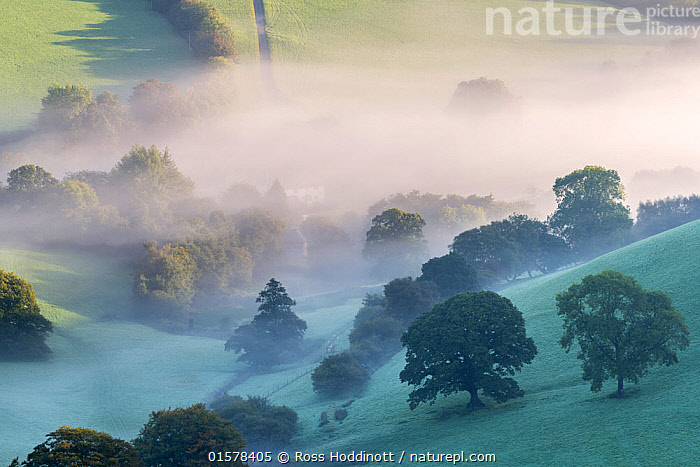 Misty morning view of Exmoor countryside from Winsford Hill, Exmoor National Park, Somerset, UK. October 2016., catalogue10,,,Morning,Mornings,Europe,Western Europe,UK,Great Britain,England,Somerset,Plant,Tree,Agricultural Land,Cultivated Land,Mist,Landscape,Autumn,Countryside,Reserve,Farmland,Protected area,National Park,Exmoor National Park,, Ross Hoddinott