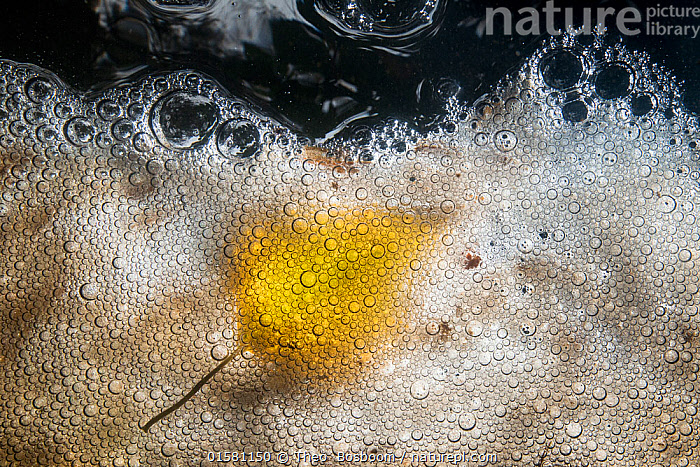 Yellow coloured Birch leaf (Betula) floating on the bubbles and foam of a stream, De Veluwe (Leuvenumse bos), Netherlands., Europe,Western Europe,The Netherlands,Holland,Netherlands,Plant,Leaf,Foliage,Bubble,Flowing Water,Stream,Streams,Autumn,Freshwater,Water,Arty shots,Abstract,Abstracts,, Theo  Bosboom