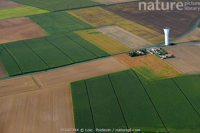 Aerial view of corn fields and farm buildings, South Vendee, France, July 2017.  ,  Europe,Western Europe,France,Pays de la Loire,Aerial View,High Angle View,Farms,Building,Agricultural Building,Food Storage Structure,Food Storage Structures,Silo,Silos,Residential Structure,House,Houses,Farmhouse,Farmhouses,Cultivated Land,Landscape,Summer,Farmland,Elevated view,Vendee,  ,  Loic  Poidevin