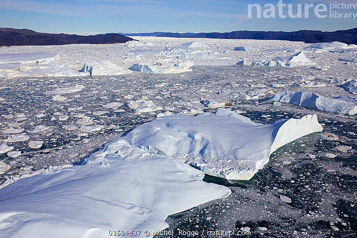 Aerial view of the Ilulissat Icefjord, with the Sermeq Kujalleq Glacier or Jakobshavn Isbrae entering the sea,  Ilulissat Icefjord UNESCO World Heritage Site, Greenland,  2014 August 2014 . Photographed for The Freshwater Project  ,  Arctic,Polar,Ice,Glacier,Iceberg,Icebergs,Landscape,Coast,Freshwater,Lake,Coastal,Water,Protected area,UNESCO World Heritage Site,Freshwater Project,Sea ice,Sermeq Kujalleq,Kalaallit Nunaat,  ,  Michel  Roggo