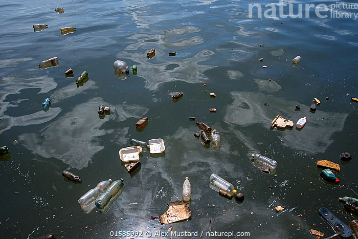 Plastic pollution floating on the surface of the water in the harbour of Havana, Cuba.  ,  Waste,La Habana,The Caribbean,Man Made Material,Plastic,Plastics,Ocean,Caribbean Sea,Environment,Environmental Issues,Environmental Damage,Marine,Water,Saltwater,Biodiversity hotspots,Littering,Marine Pollution,Surface,,, catalogue11  ,  Alex Mustard
