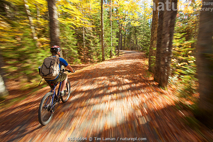 Boy rides his bike over a leaf covered park road in Acadia National Park, Maine, USA. October 2013. Model released., Acadia National Park,Autumn,Maine,Mount Desert Island,New England States,,American,Cycling,Biking,Pedaling,People,Teenager,Adventure,North America,USA,Eastern USA,New England,Maine,Plant,Tree,Autumn,Forest,Acadia National Park,American,United States of America,Young,Young Person,,, catalogue11, Tim  Laman
