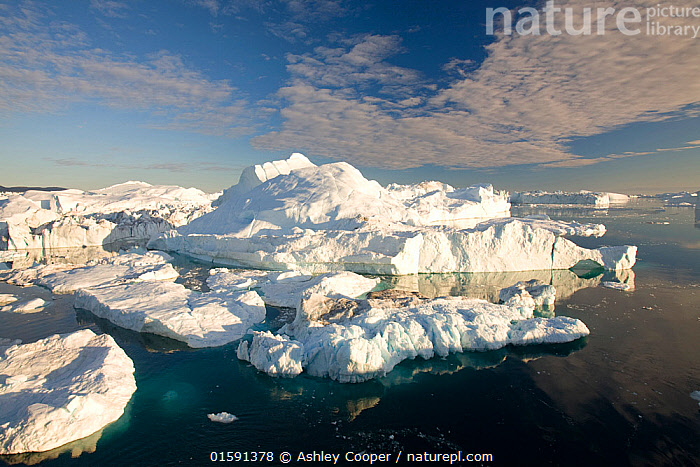 Icebergs from the Jacobshavn glacier or Sermeq Kujalleq, Greenland, July 2008.  ,  Greenland,icesheet,ice sheet,inland ice,ice sea,frozen,cold,north,Arctic,glacier,glaciation,weather,climate,global warming,climate change,melt,melting,melt water,meltwater,summer,sea level rise,meteorology,study,science,ancient,remote,challenge,ice surface,surface melting,warming,temperature,rising temperature,affect,liqued,positive feedback,Greenland ice sheet,interior,blue,sky,warm,sun,sunny,heat,energy,thermal,thermodynamics,albedo,reflection,suns energy,surface,Jacobshavn glacier,jacobshavn isbrae,ice fjord,Sermeq Kujatdleq,Sermeq Kujalleq,glacier speed,largest,ice berg,iceberg,Ilulissat,massive,huge,big,large,,,,  ,  Ashley Cooper