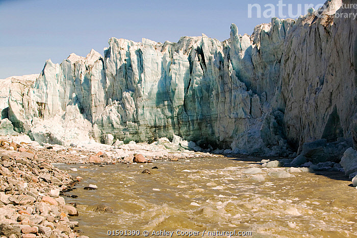 The Russells Glacier, Kangerlussuaq, Greenland. July 2008., Greenland,icesheet,ice sheet,inland ice,ice sea,frozen,cold,north,Arctic,glacier,glaciation,weather,climate,global warming,climate change,melt,melting,melt water,meltwater,lake,summer,sea level rise,meteorology,study,science,ancient,remote,challenge,ice surface,surface melting,melt water stream,warming,temperature,rising temperature,affect,liqued,positive feedback,Greenland ice sheet,interior,blue,sky,warm,sun,sunny,heat,energy,thermal,thermodynamics,crevasse,moulin,sink,stream,river,danger,dangerous,risk,risky,hazard,hazardous,albedo,reflection,suns energy,surface,Kangerlussuaq,Russells Glacier,Russel Glacier,snout,calving,iceberg,collapse,moving,glaciology,,,,, Ashley Cooper