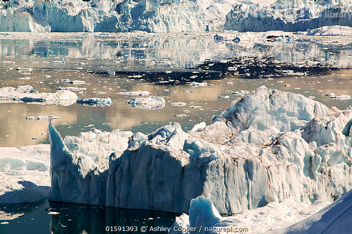 Icebergs calved from Jacobshavn glacier or Sermeq Kujalleq, Greenland, July 2008.  ,  Greenland,icesheet,ice sheet,inland ice,ice sea,frozen,cold,north,Arctic,glacier,glaciation,weather,climate,global warming,climate change,melt,melting,melt water,meltwater,summer,sea level rise,meteorology,study,science,ancient,remote,challenge,ice surface,surface melting,warming,temperature,rising temperature,affect,liqued,positive feedback,Greenland ice sheet,interior,blue,sky,warm,sun,sunny,heat,energy,thermal,thermodynamics,albedo,reflection,suns energy,surface,Jacobshavn glacier,jacobshavn isbrae,ice fjord,Sermeq Kujatdleq,Sermeq Kujalleq,glacier speed,largest,ice berg,iceberg,Ilulissat,massive,huge,big,large,,,,  ,  Ashley Cooper