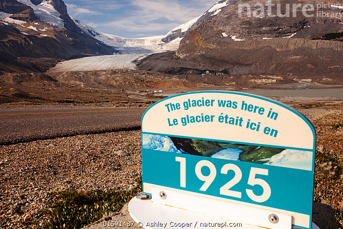 Sign marking the former extent of the Athabasca glacier, in 1925. The glacier has lost 60 percent of its ice in the last 150 years. Rocky Mountains, Alberta, Canada. August 2012.  ,  viewpoint,vista,mountain,mountains,Rockies,Rocky Mountains,glaciation,glacier,Canada,Alberta,national park,ice,Athabasca Glacier,glacial retreat,melt,melting,tourist,tourism,surface,ablation,climate change,global warming,Columbia icefield,sign,date,1925,retreat,retreating,,,,,, catalogue11  ,  Ashley Cooper