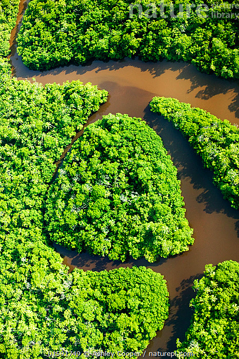 Aerial view of meandering river in rainforest on Fiji, March 2007.  ,  green leaves,chlorophyll,tree,forest,rainforest,tropical,tropics,,deforestation,clearing,river,bend,meander,meandering,island,,,,,, catalogue11  ,  Ashley Cooper