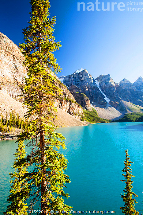 Nature Picture Library Moraine Lake Banff National Park