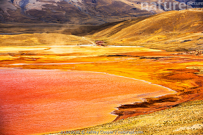 Laguna Miluni a reservoir fed by glacial melt water from the Andean peak of Huayna Potosi. As climate change causes the glaciers to melt, the water supply for La Paz, Bolivia's capital city is rapidly running dry.  Andes, Bolivia. October 2015.  ,  South America,Bolivia,La Paz,Huayna Potosi,El Alto,mountain,altitude,high,glacial retreat,climate change,global warming,mountain range,Cordillera Real,Altiplano,water supply,grass,grassland,reservoir,low,drought,Laguna Miluni,Miluni,colour,colourful,iron,iron staining,red,orange,pink,purple,discoloured,mining,mine effluent,polluted,pollution,contaminated catalogue10,,,Latin America,South America,Bolivia,  ,  Ashley Cooper