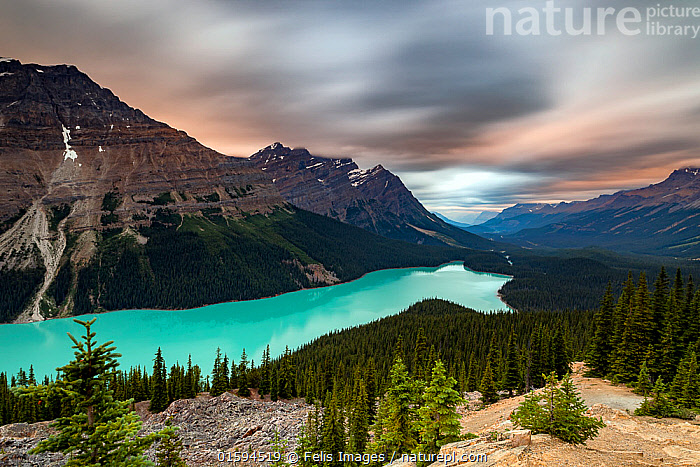 View looking out over Lake Peyto at sunset, Banff National Park, Alberta, Canada. July 2017.  ,  Colour,Blue,North America,Canada,Alberta,Sky,Cloud,Freshwater,Lake,Water,Reserve,Protected area,National Park,Banff National Park,Rocky Mountains,  ,  Felis Images