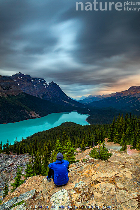 Man looking out over Lake Peyto, Banff National Park, Alberta, Canada.  ,  Walking,People,Man,Adventure,Colour,Blue,North America,Canada,Alberta,Mountain,Sky,Cloud,Sunset,Setting Sun,Sunsets,Landscape,Hiking,Freshwater,Lake,Water,Reserve,Protected area,National Park,Dusk,Banff National Park,Moving,Rocky Mountains,Movement,  ,  Felis Images