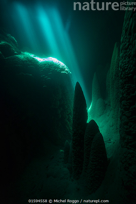 Under water in the Abismo Anhumas or Anhumas Abyss. This is a 80 metre deep lake, at the bottom of a 72 metre deep cave. Bonito area, Serra da Bodoquena (Bodoquena Mountain Range), Mato Grosso do Sul, Brazil, November 2017. Photographed for The Freshwater Project  ,  Mystery,Deep,Depth,Dark,Latin America,South America,Brazil,Cave,Sunlight,Light Ray,Freshwater Project,Natural Light,Mato Grosso do Sul,,, catalogue11  ,  Michel  Roggo