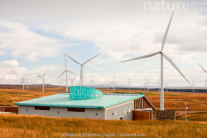 Whitlee wind farm on Eaglesham Moor just south of Glasgow in Scotland, UK, is Europes largest onshore wind farm with 140 turbines and an installed capacity of 322 MW, enough energy to power 180,000 homes. The Scottish Power visitor centre is in the foreground. October 2010, Scotland,Lanarkshire,climate change,global warming,energy,power,renewable energy,clean energy,carbon neutral,wind power,wind farm,wind turbine,carbon footprint,moorland,sky,blue,cloud,Whitelee,Whitelee windfarm,Eaglesham,Eaglesham moor,sustainable,sustainability,large,MW,megawatt,output,energy needs,energy production,electricity production,rotor,turbine,nacelle,Scottish Power,energy company,investment,green investment,visitor centre,roof,green,green build,eco build,copper,grey water,efficient,,,Europe,Western Europe,UK,Equipment,Power Equipment,Turbine,Wind Turbine,, Ashley Cooper