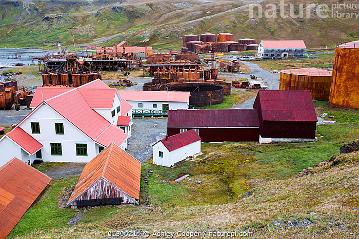 Old whaling station at Grytviken, South Georgia. In its 58 years of operation, it handled 53,761 slaughtered whales, producing 455,000 tons of whale oil and 192,000 tons of whale meat. February 2014  ,  Austral,South Atlantic,Antarctic,Sub Antarctic,Southern Ocean,island British,South Georgia,rugged,remote,beach,harbour,boat,ship,whaling,whaling ship,whaling industry,abandoned,Grytviken whaling station,Whaling station,Grytviken,scrap,scrap metal,steel,rust,rusty,rusting,artefact,parts,history,heritage,industrial archaeology,Shackleton,Ernest Shackleton,Sir Ernest Shackleton,preserved,house,museum,whale oil,,,,  ,  Ashley Cooper