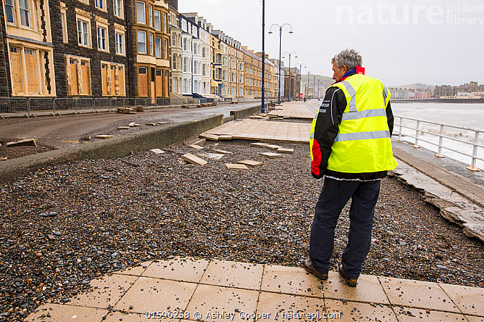 Paving slabs which have been ripped up and tossed 30 feet across the street after severe storm, Aberystwyth, Wales, UK. January 2014  ,  Aberystwyth,Wales,sea,sea front,promenade,damage,destruction,shingle,seafront,High Street,infrastructure,red,lifebelt,life saving,storm damage,Irish sea,climate change,global warming,power,powerful,weather,extreme weather,storm surge,road,high tide,inundated,salt water,tidal,tidal surge,UK,storm,wind,windy,storm force,wave,waves,crashing,eroded,erosion,coastal erosion,harbour wall,battered,battering,crash,West Coast,Atlantic,Ceredigion,sorting,clear up,clean up,gravel beach material,chipboard,chip board,boarded up,window,protection,concrete,slab,paving,paving slab,man,male,workman,high vis,PPE,,,Europe,Western Europe,UK,  ,  Ashley Cooper
