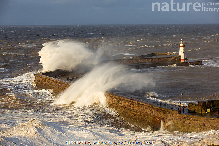 Storm waves from an extreme low pressure system batter Whitehaven harbour, Cumbria, UK, December 2014., Whitehaven,Cumbria,UK,weather,extreme weather,harbour,wall,battering,wave,crashing,breaking,storm,wind,windy,low pressure,weather bomb,West Coast,Irish Sea,stormy,stormy weather,high tide,wave height,overpowering,power,powerful,wave power,lighthouse,house,building,spray,salt spray,,,Europe,Western Europe,UK,Building,Lighthouse,Lighthouses,Weather,Bad Weather,Severe weather,,, catalogue11, Ashley Cooper