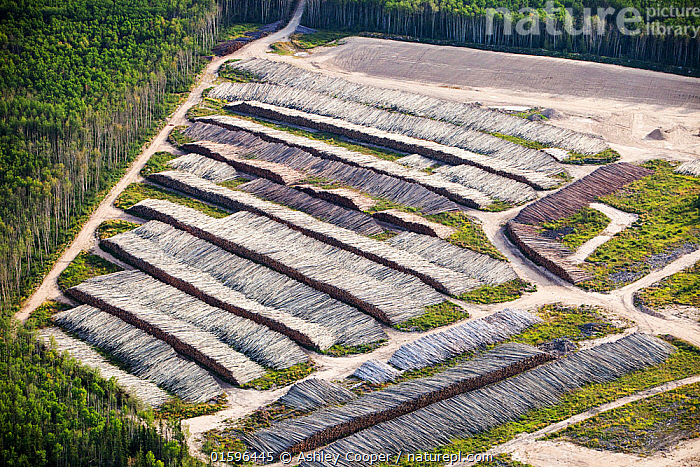 Boreal forest trees clear felled to make way for a new tar sands mine north of Fort McMurray, Alberta, Canada.  August 2012, tar sand,tar sands,oil sand,oil sands,oil industry,fossil fuel,climate change,global warming,industry,heavy industry,industrial,Athabasca,Alberta,Canada,destruction,strip mining,Fort McMurray,environment,environmental destruction,carbon footprint,Boreal Forest,oil,bitumen,deposits,oil reserves,mine,mining,tree,woodland,chop down,clear fell,deforestation,clear,carbon sink,timber,log,log pile,lumber,aerial,aerial photograph,,,,,, catalogue11, Ashley Cooper