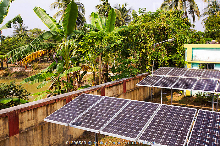 WWF project to supply electricity to a remote island in the Sunderbans, Ganges Delta, India. December 2013, Calcutta,kolkata,India,Asian,Sunderbans,Ganges Delta,Ganges,coast,tidal,island,low lying,sea level rise,forest,tree,palm tree,solar,solar power,solar panel,solar energy,climate change,global warming,PV,photo voltaic,electricity,generating,carbon neutral,clean,green,solar cell,off grid,power,WWF,project,NGO,charity,poverty relief,carbon offset,carbon offsetting,,,Environment,Environmental Issues,Power supply,Sustainable power,Energy,Solar power,, Ashley Cooper