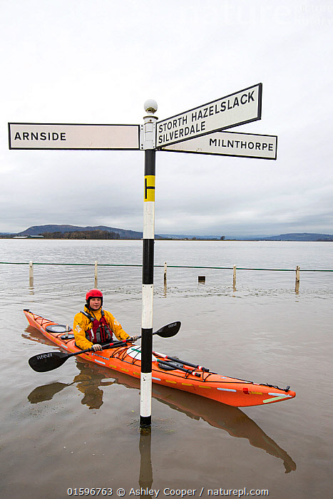 Kayakers in the flood waters on the road at Storth, Kent Estuary in Cumbria, UK, during the January 2014 storm surge and high tides. January 2014, sea,sea front,promenade,damage,destruction,storm damage,Irish sea,climate change,global warming,shingle,seafront,High Street,power,powerful,weather,extreme weather,storm surge,infrastructure,road,flooded road,Sandside,Storth,Arnside,Kent estuary,Morecambe Bay,high tide,flood waters,inundated,salt water,tidal,tidal surge,pedestrian,onlooker,observer,canoe,canoeist,kayak,kayaker,kayaking,paddle,paddling,sign,road sign,orange,man,male,,,,,, catalogue11, Ashley Cooper